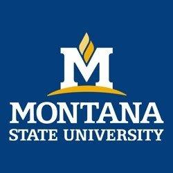 Montana-State-University.jpg