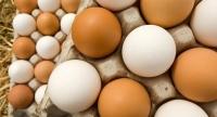 استدعاء ٢٠٠ مليون بيض مائدة خوفاً من تلوثها بـبكتيريا السالمونيلا